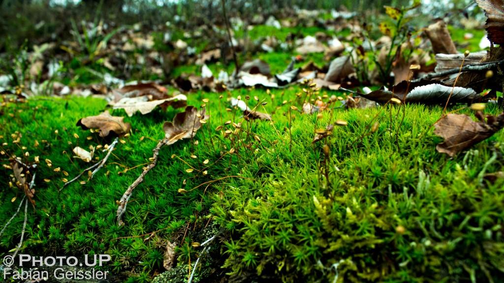 Herbst Bild bei UnnamedProduction, Fabian Geissler